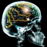 İlkel Vücudumuza Hapsolmuş Beynimiz …