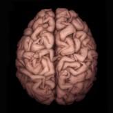 Hangi Beyninizi Kullanıyorsunuz?