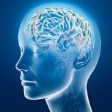 Beynimiz ve Nöropeptin