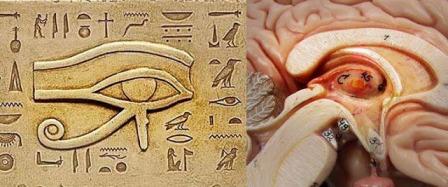 Horus ve beyin