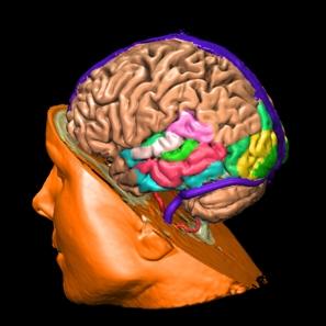 Beyin