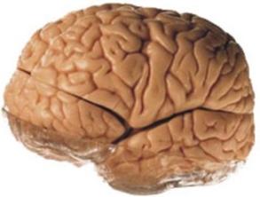 Beyine Atılan Tokatlar…