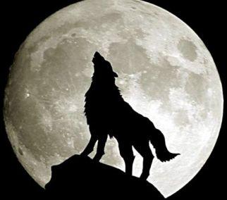 Gece, dolunay, kurt ve avcı…