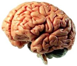 Nöroloji Testi