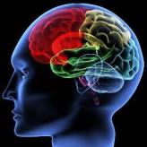 Beyin Kullanma Klavuzu – 2 / Mumin Sekman