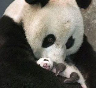 Hayatınızdaki Tüm Annelere… / Anonim